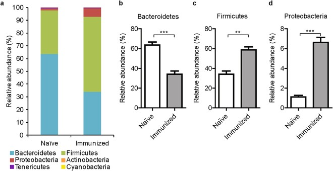 Changes in fecal microbiota after immunization with type II collagen