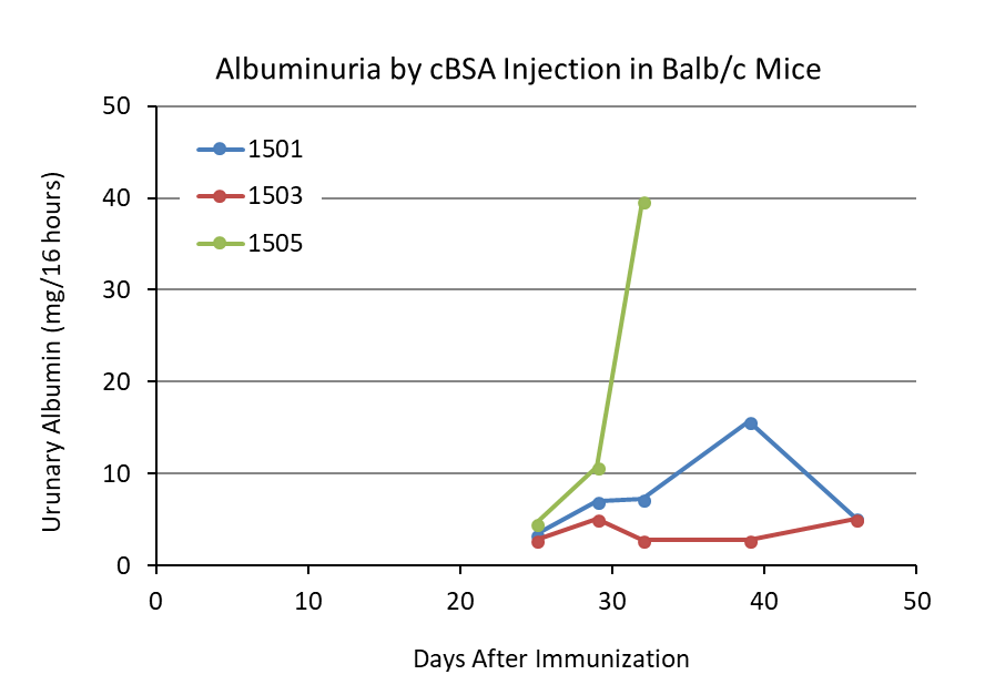 Urinary albumin levels of Balb/c mice injected with cationic BSA (cBSA) to induced experimental nephritis.