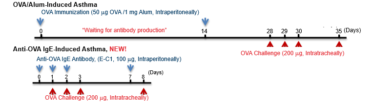 Timeline of Ovalbumin-Induced Asthma Model, Anti-Ovalbumin IgE Asthma Model