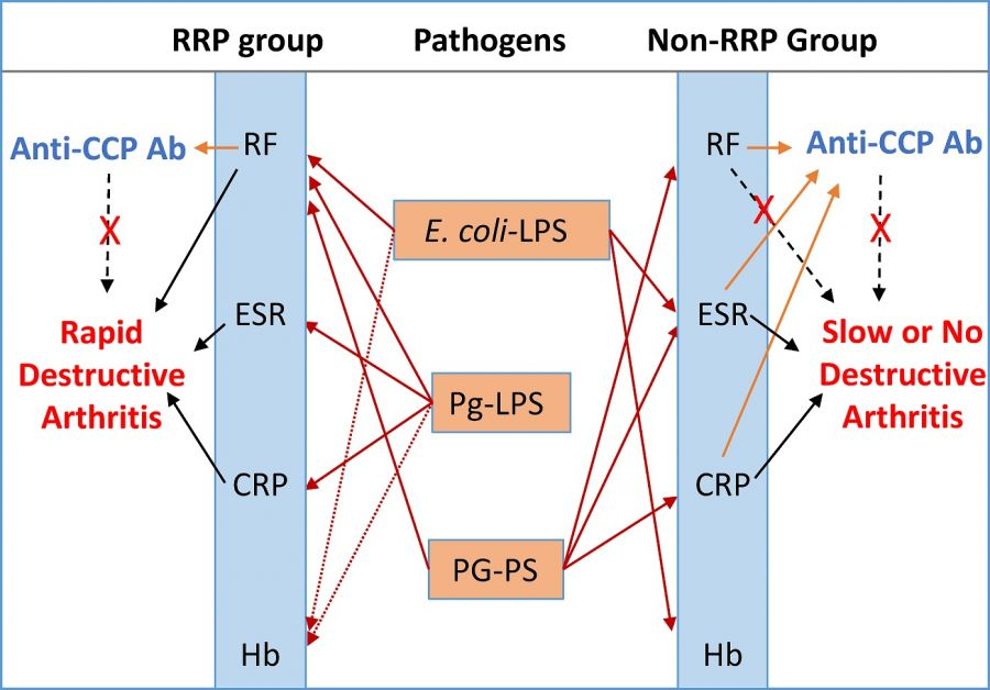 Different bacterial pathogens evoke serological disease markers in RRP and non-RRP rheumatoid arthritis, affecting disease outcomes.